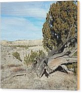 Arid Beauty Wood Print