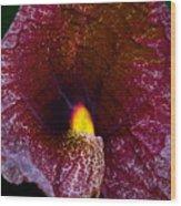 Aristolochia Elegans  Wood Print