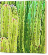 Arizona Cactus #16 Wood Print