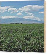 Arizona Cotton Field Wood Print