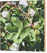 Arizona Cotton Wood Print