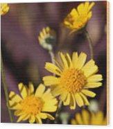Arizona Daisy Wood Print