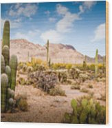 Arizona Desert #3 Wood Print