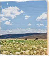 Arizona Desert Horses Wood Print by Ryan Kelly