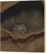 Arizona Diamondback Rattlesnake Wood Print