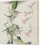 Arizona Hummingbirds Wood Print