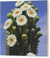 Arizona State Flower- The Saguaro Cactus Flower Wood Print
