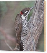 Arizona Woodpecker Wood Print