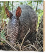 Armadillo In The Woods Wood Print