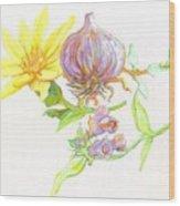 Arnica Garlic Thyme And Comfrey Wood Print