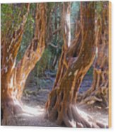 Arrayanes Grove On Trail In Arrayanes National Park Near Bariloche-argentina Wood Print