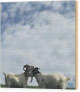Art Goats II Wood Print