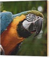 Art Macaw Wood Print
