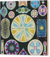 Art Of Diatom Algae (from Ernst Haeckel) Wood Print by Mehau Kulyk