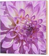 Art Prints Dahlia Flower Decorative Art Garden Baslee Wood Print