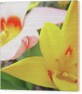 Art Prints Pink Tulip Yellow Tulips Giclee Prints Baslee Troutman Wood Print