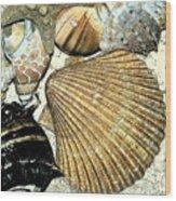 Art Shell 2 Wood Print