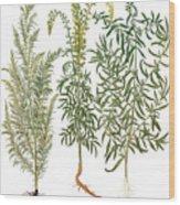 Artemisiae & Reseda Wood Print