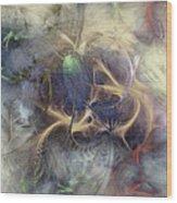 Arthropodium Wood Print