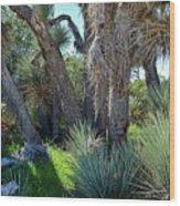 Arthur B Ripley Desert Woodland State Park Wood Print