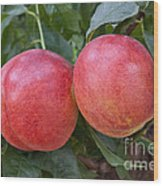 Artic Summer Nectarines Wood Print