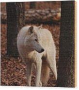 Artic Wolf Wood Print