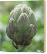 Artichoke In Spain Wood Print