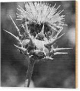 Artichoke Thistle Bw Wood Print