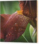 Artistic Iris Wood Print