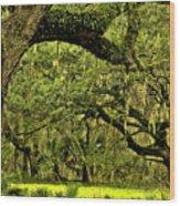 Artistic Live Oaks Wood Print