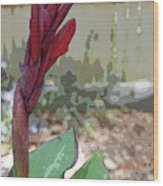 Artistic Red Canna Lily Wood Print