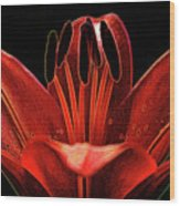 Artistic Red Pixie Asiatic Lily Wood Print