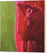 Artistic Red Tulip Wood Print
