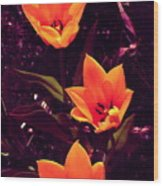 Artistic Tulips By Earl's Photography Wood Print