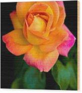 Arundel Rose Wood Print