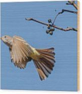 Ash-throated Flycatcher Flight Wood Print