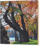 Asian Cherry Trees Of Fall Wood Print