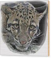 Asian Cloud Leopard Wood Print
