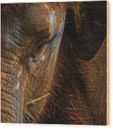 Asian Elephant Closeup Portrait Wood Print