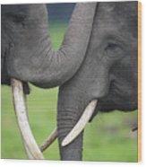 Asian Elephant Greeting Wood Print