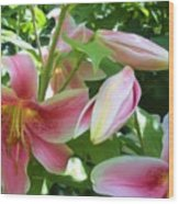 Asian Lilies Unfolding Wood Print