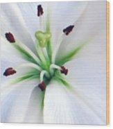 Asian Lilly I I Wood Print