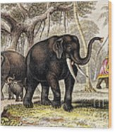 Asiatic Elephant With Young, 19th Wood Print