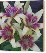Asiatic Lillies Again Wood Print