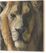 Asiatic Lion Wood Print