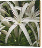 Asiatic Poison Lily Wood Print