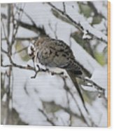 Asleep In The Snow - Mourning Dove Portrait Wood Print