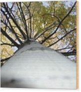 Aspen Wood Print