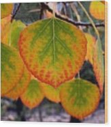 Aspen Color Wood Print