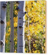 Aspen Color Wood Print